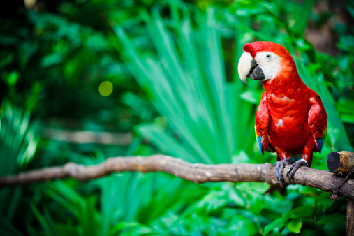 Mayan Riviera「A scarlet macaw parrot sitting on a branch」:スマホ壁紙(7)