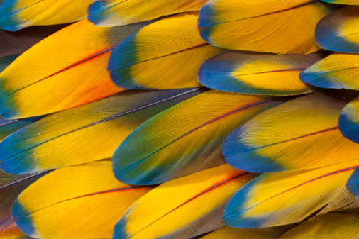 Pacific Northwest「Scarlet Macaw Wing feather coverts pattern」:スマホ壁紙(19)