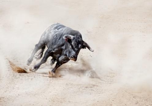 Horned「Bull charging across sand creating dust cloud」:スマホ壁紙(11)