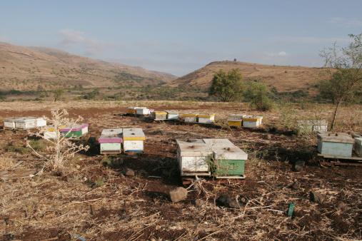 Basalt「Beehives on the Golan Heights with basalt rocks and dark soil. Israel」:スマホ壁紙(17)