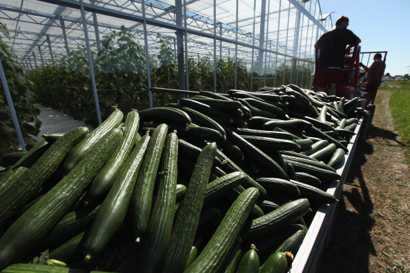 Greenhouse「Farmers Fear Ruin Following EHEC Outbreak」:写真・画像(2)[壁紙.com]