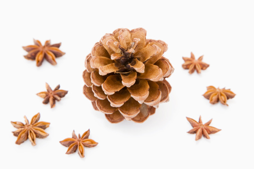 Pine Cone「Fir cone and star-anise」:スマホ壁紙(14)