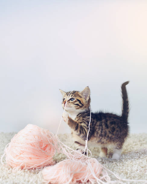 What? I was trying to knit you a sweater:スマホ壁紙(壁紙.com)