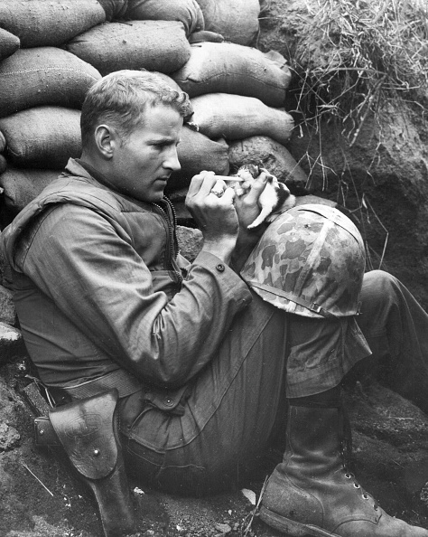 Kitten「Soldier Feeds Cat」:写真・画像(3)[壁紙.com]