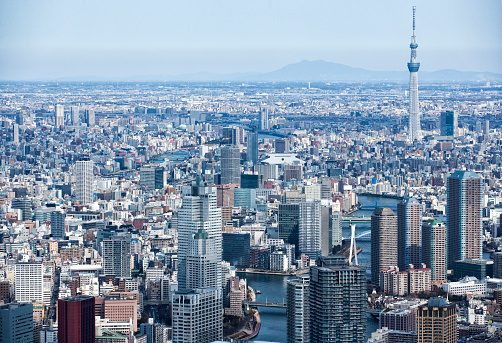 City Life「SKYTREE and many office buildings」:スマホ壁紙(5)