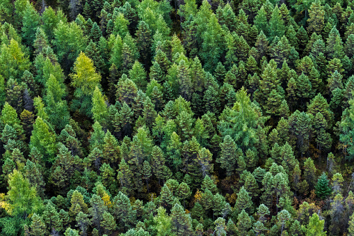 Boreal Forest「Quebec lush and green forests seen from the sky.」:スマホ壁紙(10)