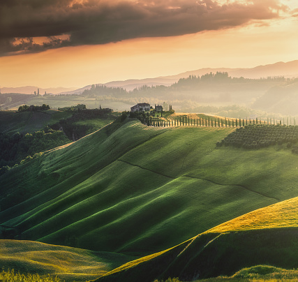 Italian Cypress「Tuscany sunset landscape view of green hills fringed with cypress trees Italy, Europe」:スマホ壁紙(19)