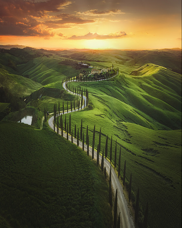 Italian Cypress「Tuscany sunset landscape view of green hills fringed with cypress trees Italy, Europe」:スマホ壁紙(18)