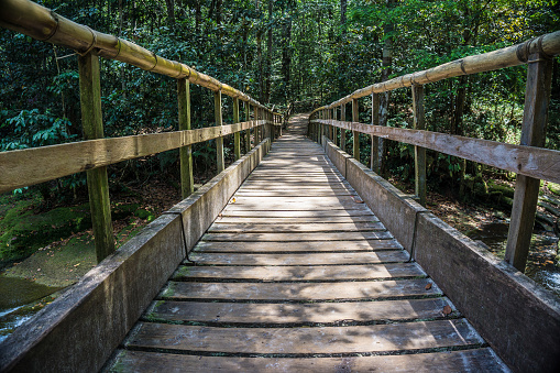 Amazon Rainforest「Beautiful wood bridge in amazon rainforest」:スマホ壁紙(5)