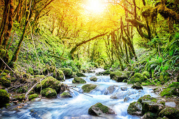 Beautiful wild fresh water stream in forest under bright sunlight:スマホ壁紙(壁紙.com)