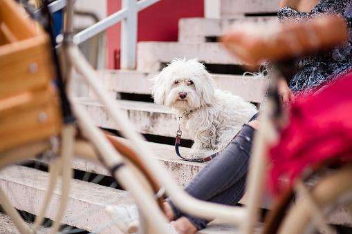 サイクリング「美しい白犬屋外楽しんで夏の日」:スマホ壁紙(10)