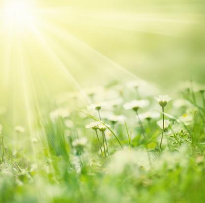 春「Meadow sunlights 付き」:スマホ壁紙(11)