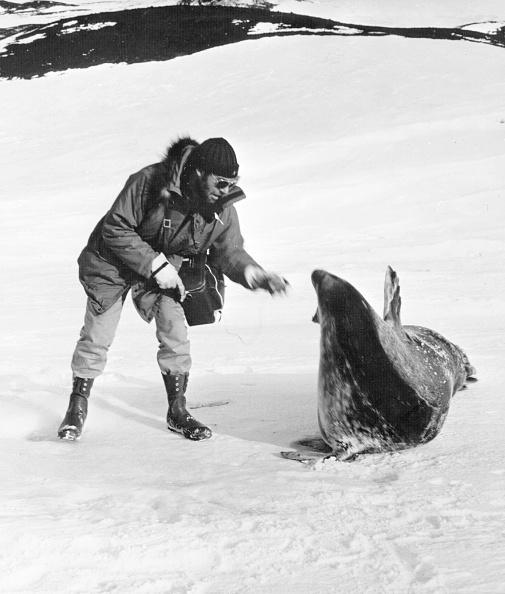 Animal Wildlife「Seal Interview」:写真・画像(1)[壁紙.com]
