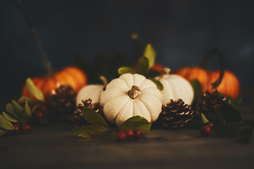 Miniature Pumpkin「Thanksgiving arrangement with pumpkin variety and berries」:スマホ壁紙(5)