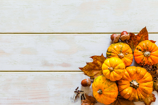 Orange - Fruit「Thanksgiving day or autumn gourds holiday background」:スマホ壁紙(4)