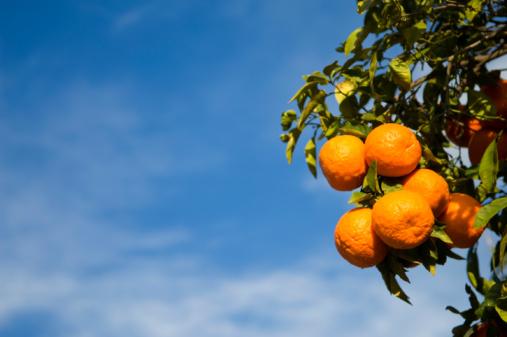 オレンジジュース「オレンジ」:スマホ壁紙(12)