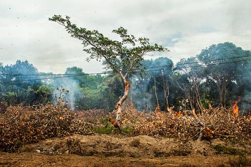 Deforestation「Tree near power lines in burning forest fire」:スマホ壁紙(4)