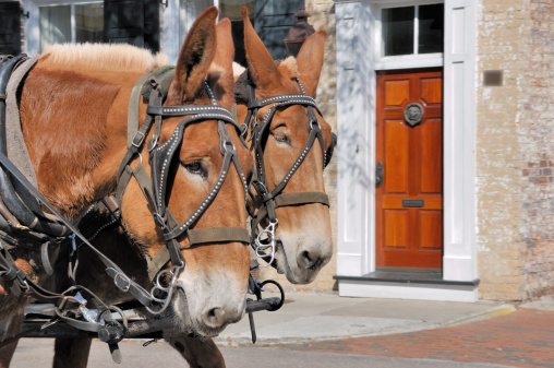 Horse-drawn carriage「チャーミングなサウスカロライナ州チャールストン」:スマホ壁紙(14)