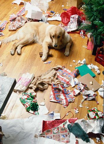 Gift「Mischievous Dog」:スマホ壁紙(15)