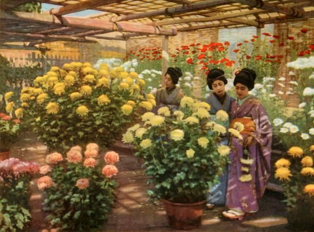 At The Chrysanthemum Show:ニュース(壁紙.com)