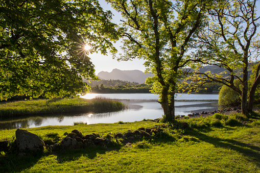 Tree「Elter Water and the Langdale Pikes, Elterwater, Lake District National Park, Cumbria, England, UK」:スマホ壁紙(1)