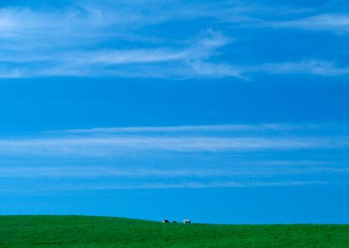 Hokkaido「Pasture」:スマホ壁紙(5)