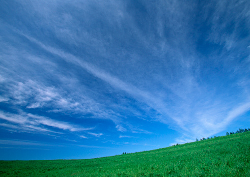 Hokkaido「Pasture」:スマホ壁紙(2)