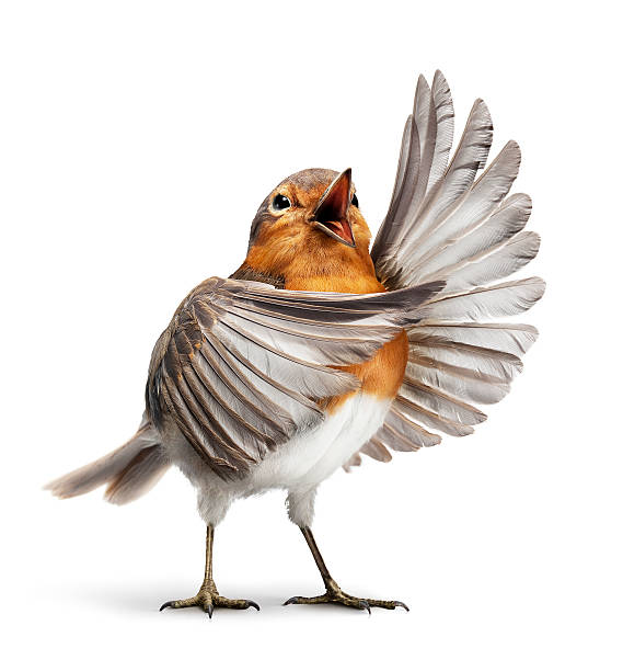 Opera bird 1:スマホ壁紙(壁紙.com)
