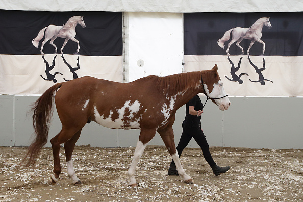 Awe「50 Horses From The Cavalia Show Arrive In Singapore」:写真・画像(13)[壁紙.com]