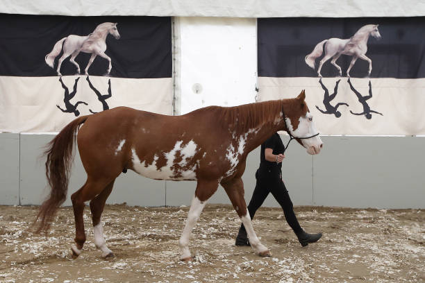 50 Horses From The Cavalia Show Arrive In Singapore:ニュース(壁紙.com)