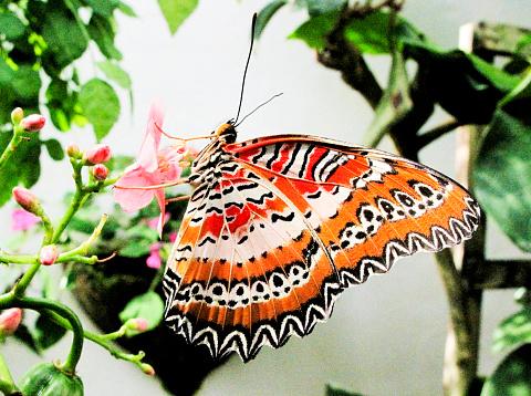 虫・昆虫「Butterfly feeding on a pink flower close-up」:スマホ壁紙(7)