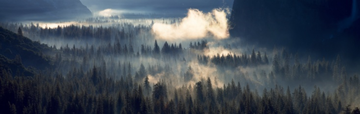 Fog「Fog Over The Forest, Yosemite National Park, California, USA」:スマホ壁紙(16)