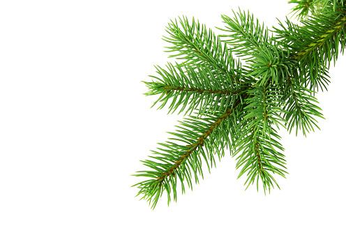 Needle - Plant Part「Christmas tree branch od white backgound」:スマホ壁紙(2)
