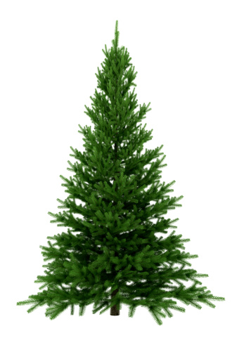 Artificial「Christmas Tree Isolated on White Background (XXXL)」:スマホ壁紙(16)