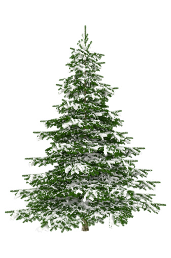 Branch - Plant Part「Christmas Tree Isolated on White with Snow (XXXL)」:スマホ壁紙(12)