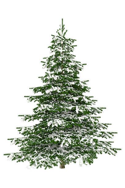 Christmas Tree Isolated on White with Snow (XXXL):スマホ壁紙(壁紙.com)