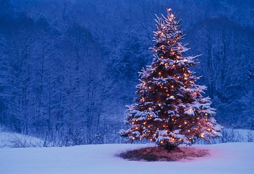 Christmas Lights「Christmas Tree and Forest」:スマホ壁紙(10)