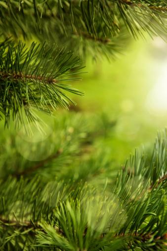 とげ「クリスマスクリスマスツリー」:スマホ壁紙(16)