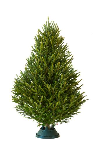 Branch - Plant Part「Christmas tree」:スマホ壁紙(7)