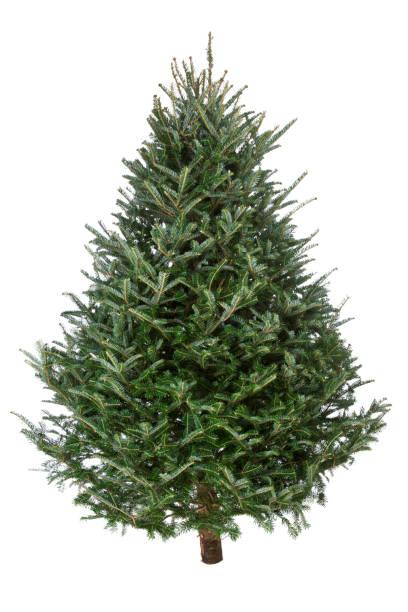 Christmas Tree, Real Fraser Fir:スマホ壁紙(壁紙.com)