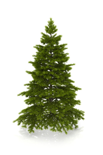 マツ科「クリスマスクリスマスツリー」:スマホ壁紙(17)
