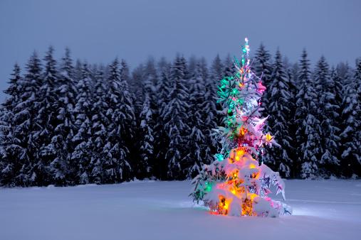 クリスマスカード「クリスマスクリスマスツリー」:スマホ壁紙(11)