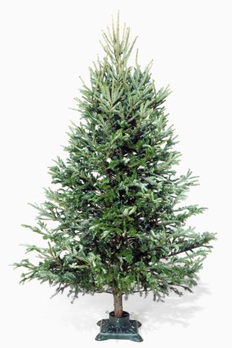 マツ科「Christmas tree in stand without decorations」:スマホ壁紙(19)
