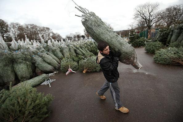 Christmas Tree「Christmas Tree Sellers In London」:写真・画像(16)[壁紙.com]