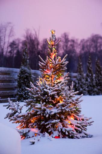 常緑樹「クリスマスツリー、新鮮な、ふわふわの雪」:スマホ壁紙(8)