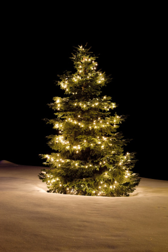 Christmas Lights「Christmas Tree with White Lights on Sparkling Snow Covered Slope」:スマホ壁紙(18)