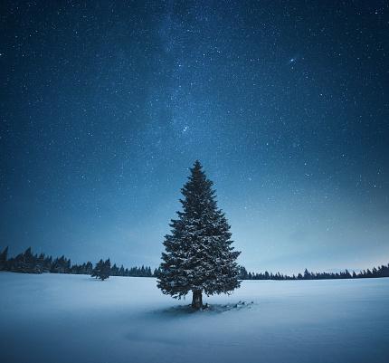 星空「クリスマスツリー」:スマホ壁紙(1)