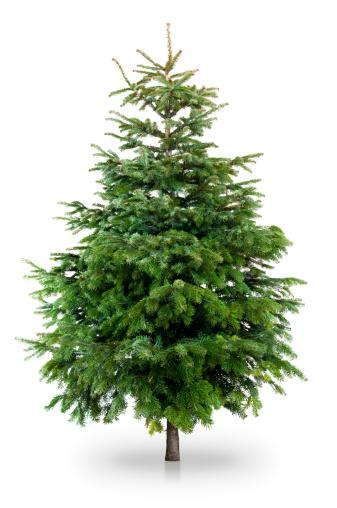 Branch - Plant Part「Christmas tree」:スマホ壁紙(0)