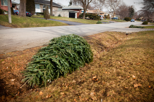 New Year「Christmas tree on the curb for garbage」:スマホ壁紙(12)