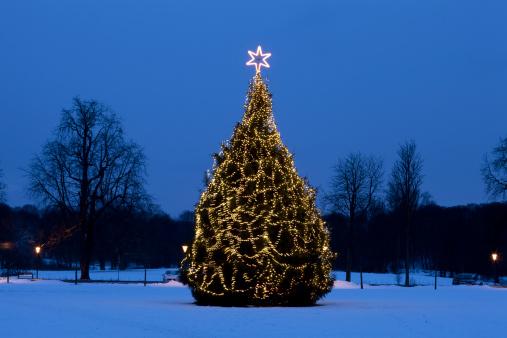 Denmark「Christmas tree at night in Copenhagen」:スマホ壁紙(2)